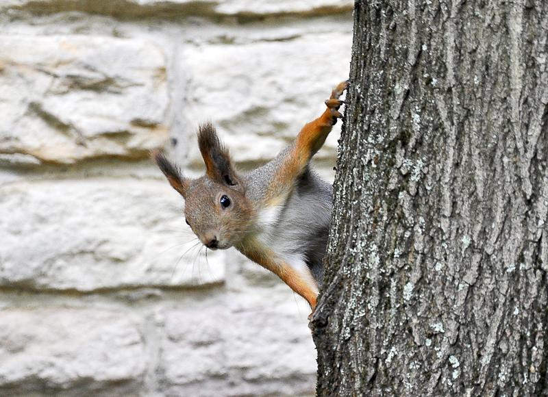 Squirrel at Füvészkert Botanical Garden Budapest