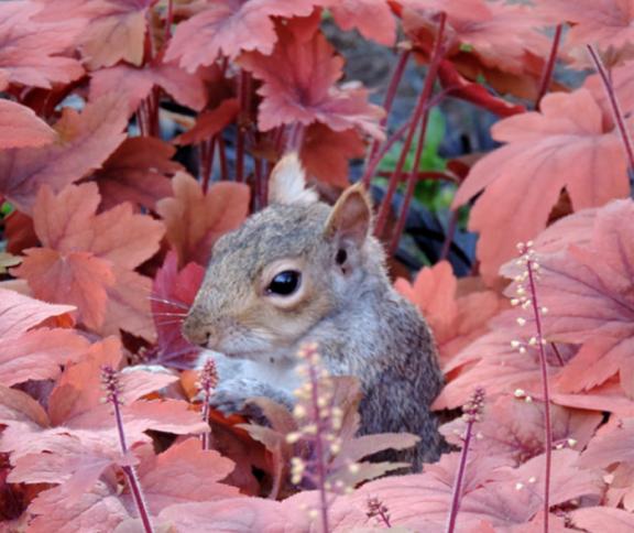 Regents Park autumn