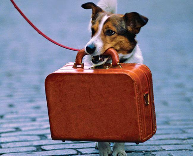 utazó kutya