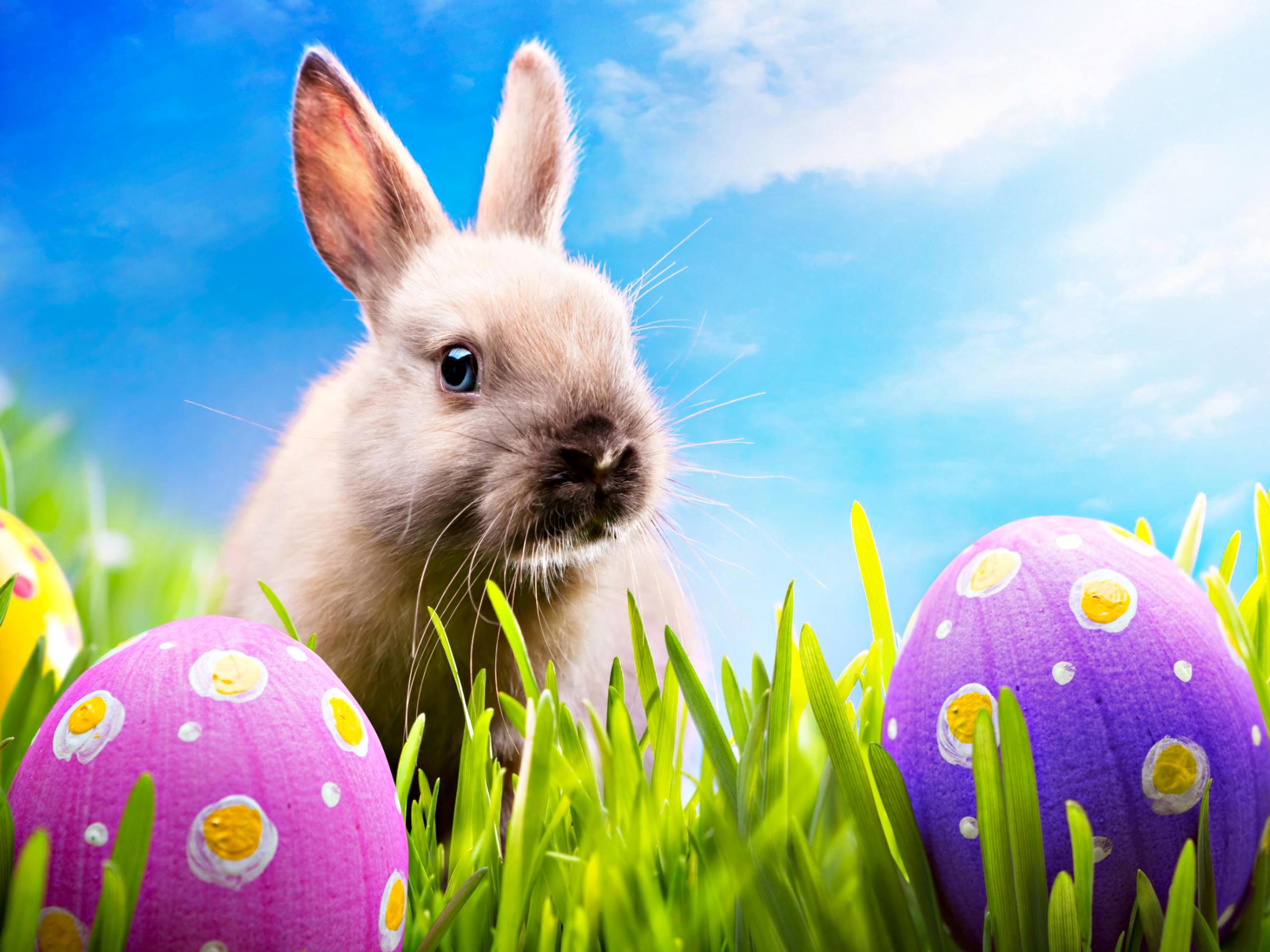 Húsvéti nyuszi tojásokkal - húsvéti programok 2016