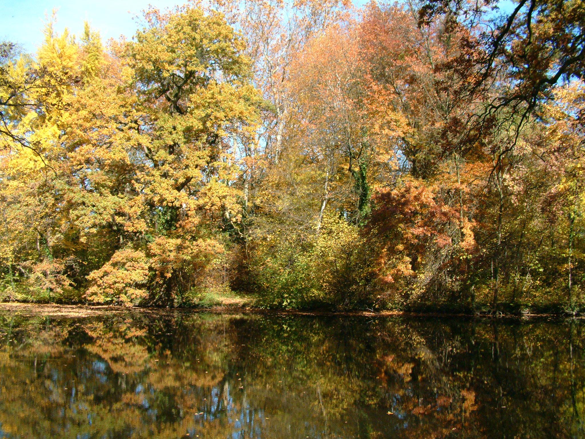 őszi Sárvári Arborétum