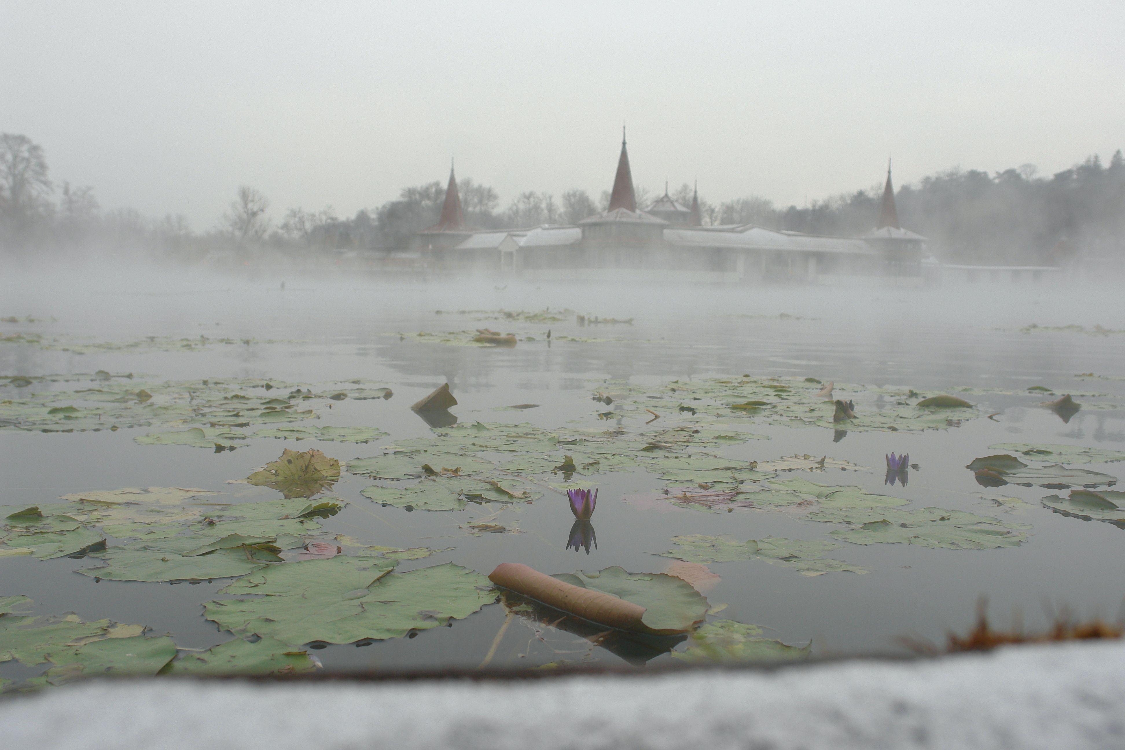 Hévízi-tó télen