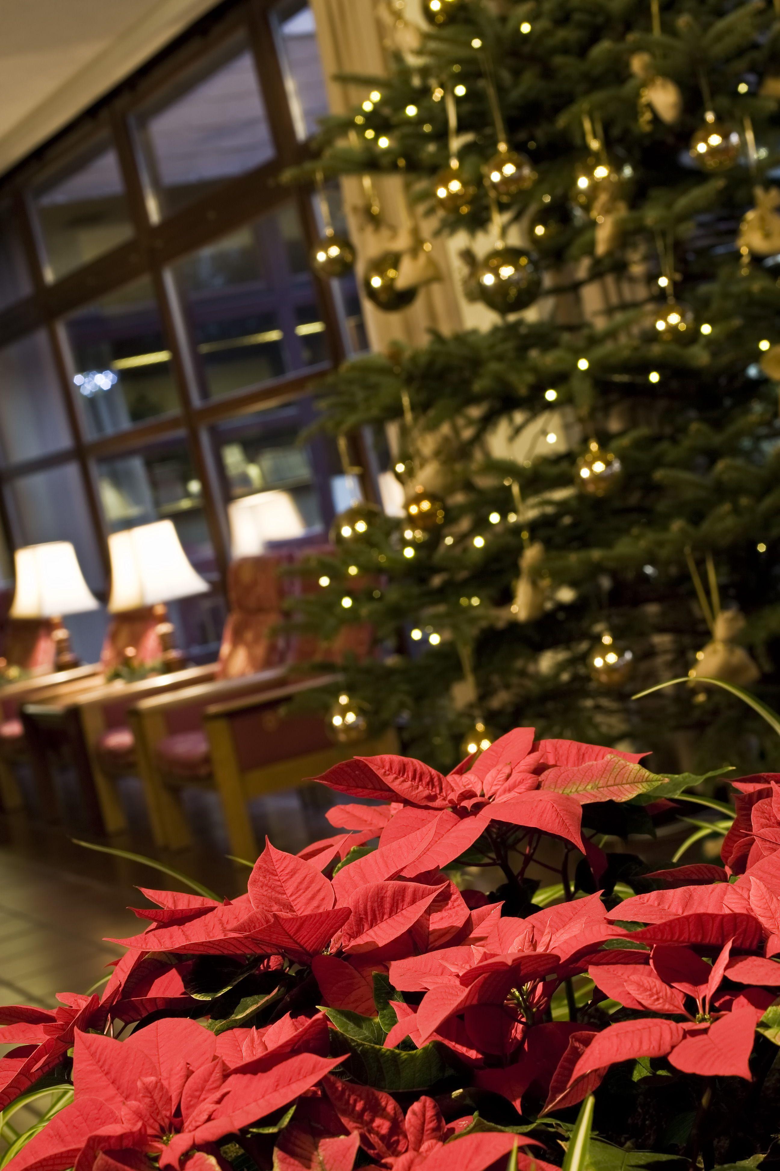 Karácsonyi hangulat Sárváron
