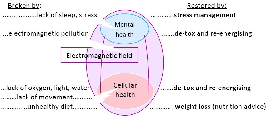 DANUBIUS MEDICAL WELLNESS (PREVENTION) PROGRAMS